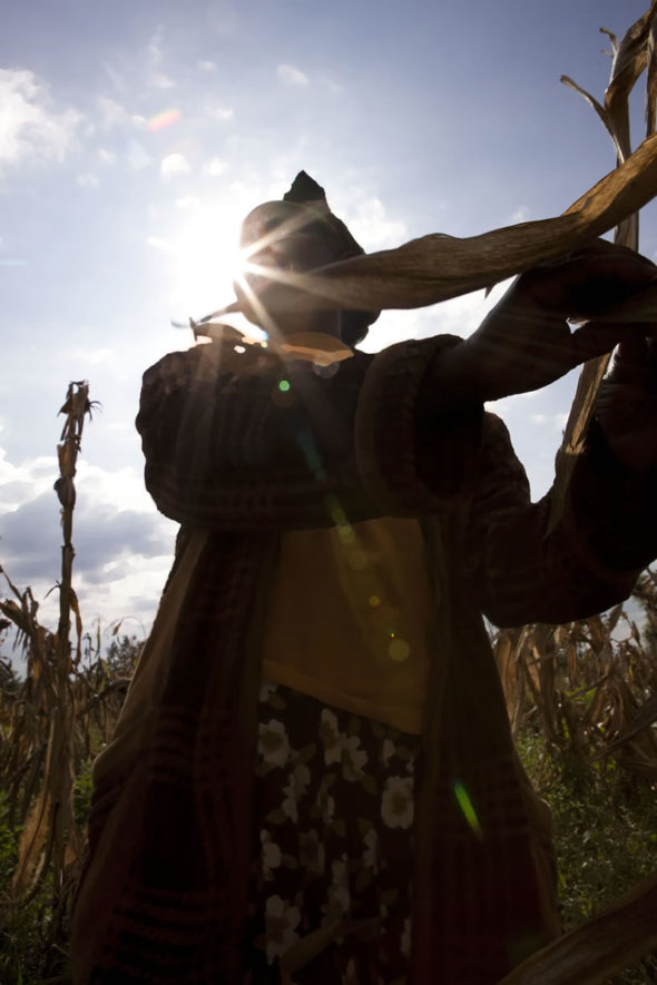 Beautiful Black Women Portrait Photography Kenya Corn Fields Beautiful Woman Charney Magri 2004