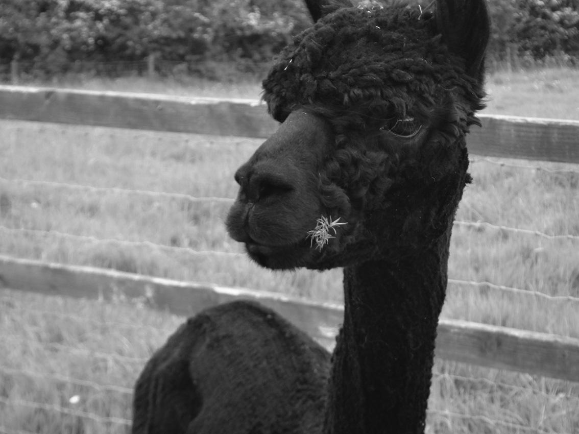 charney-magri-ally-bee-alpaca-yarns2